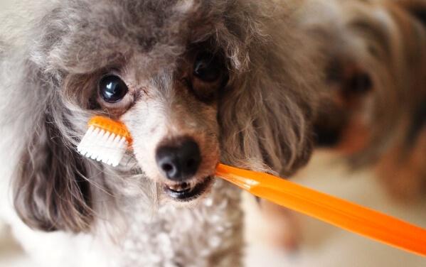 「歯磨き粉はどれも一緒」そう考えていた時期が俺にもありました。